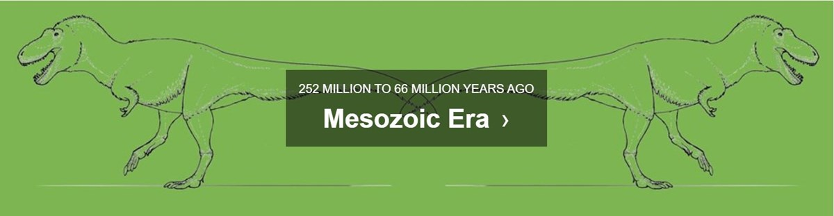 green background with text mesozoic era 252 MILLION TO 66 MILLION YEARS AGO
