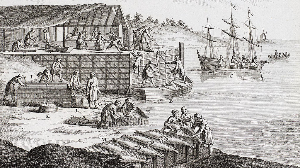 Black and white print from an engraving plate depicting a large number of fishermen on a forested coastline working on cleaning and salting many processed codfish. Prominent in center are cod laid out on a table to dry. In background is a structured with a thatched roof. The artist cut away at a portion of the roof to show men working inside to clean and salt fish in barrels. In background are men fishing on a three masted boat as well as on a rowboat.