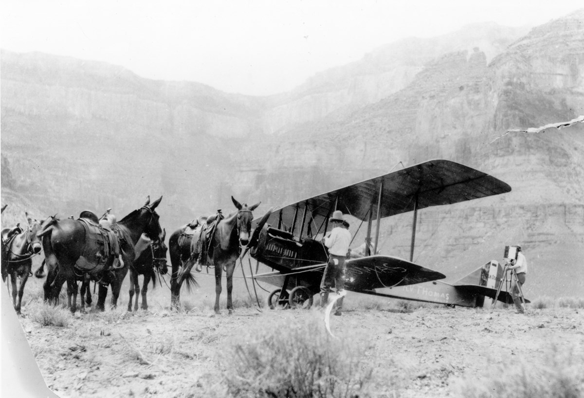 A group of burros standing next to a recently landed biplane.