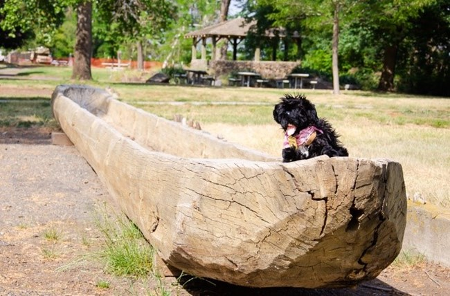 Toy dog on canoe