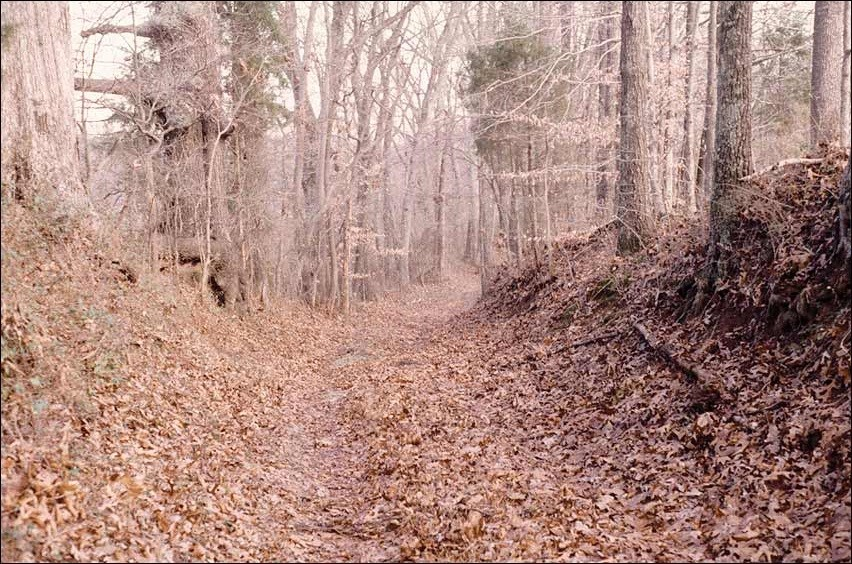 Path through the woods covered with leaves.
