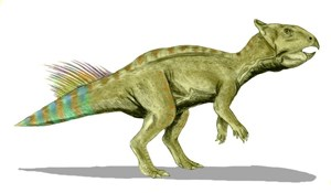 illustration of a ceratopsian dinosaur