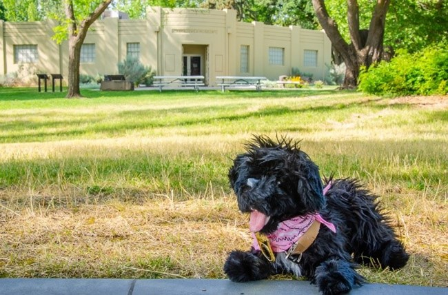 toy dog with visitor center in the background
