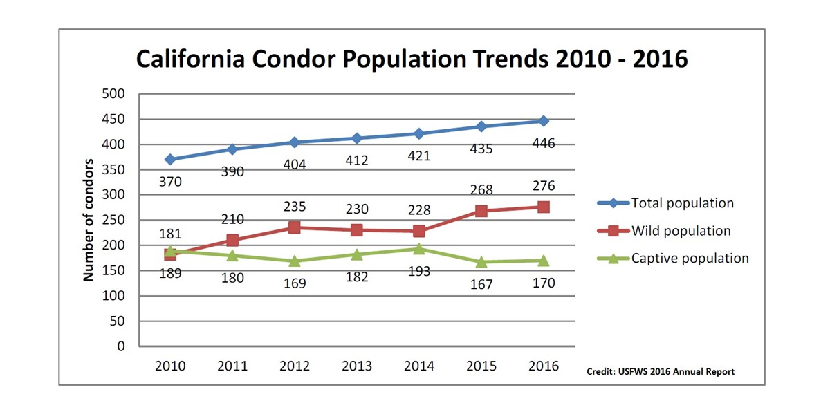 A line chart showing how the population of California condors has increased gradually between 2010 and 2016.