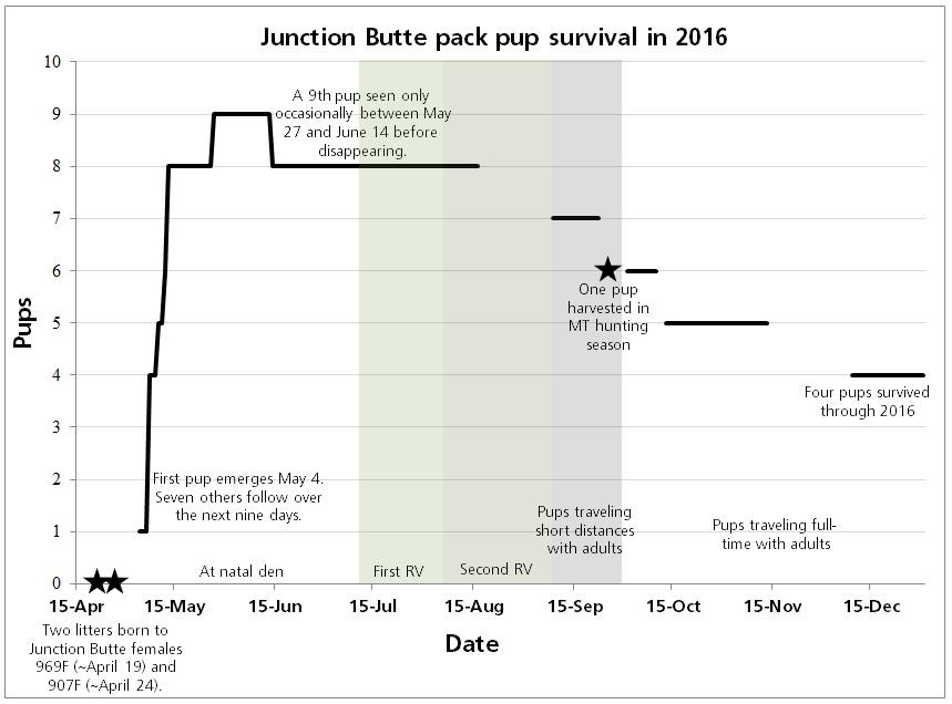 Pup Survival Junction Butte Pack 2016