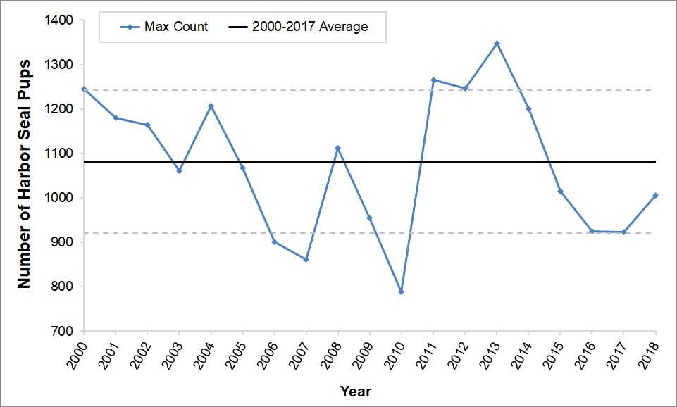 Line graph showing maximum harbor seal pup counts for 2000-2018. Counts have mostly remained within one standard deviation around the mean. The lowest count was in 2010, the highest count was in 2013, and this year's count is right around the mean
