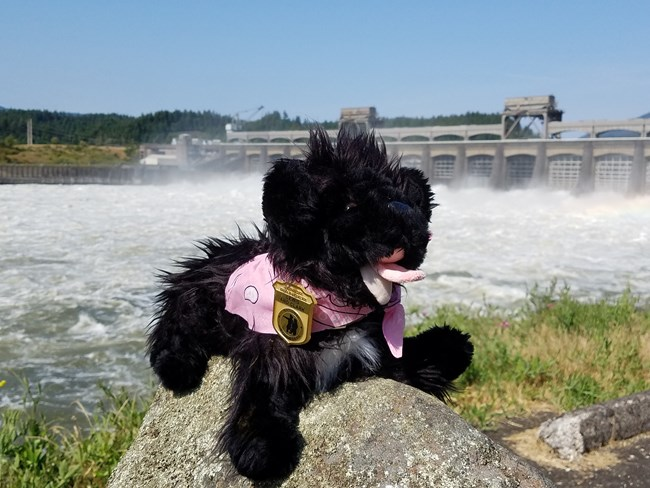 stuffed pup near dam