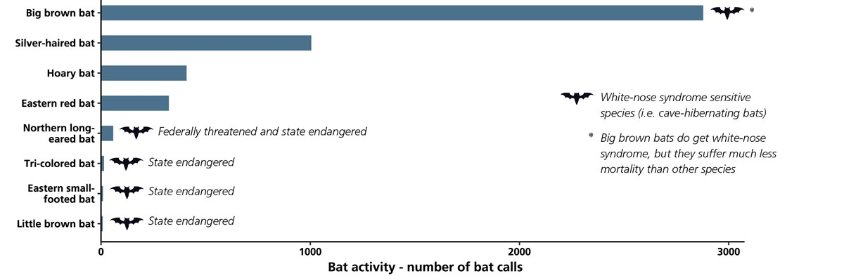 Bar chart showing bat species activity based on the number of recorded bat calls in the park.