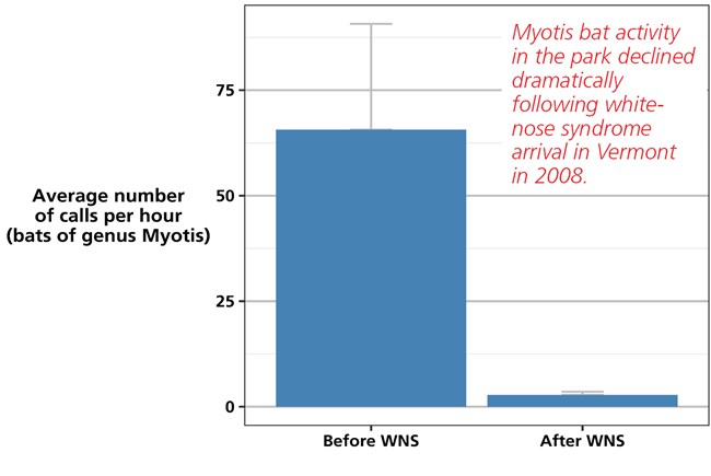 Bar chart showing Myotis bat species activity based on the number of recorded bat calls in the park both before and after white-nose syndrome's introduction.