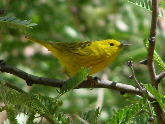 Birding For Beginners (U S  National Park Service)