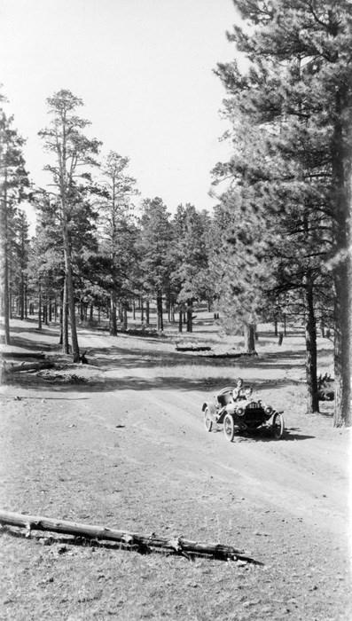 Metz car driving forward on a dirt path through fir trees.