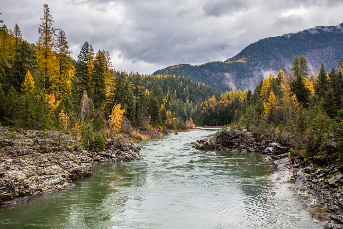 Yellow aspens and evergreens line rocky shore of river.
