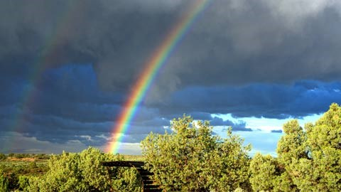 Rainbow cutting through storm clouds above green shrubs