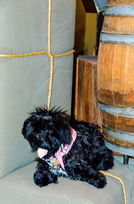 toy dog near barrell