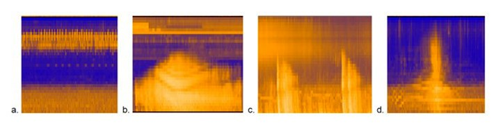 Four spectrograms show frequency range of bird song, a jet, thunder, and a vehicle