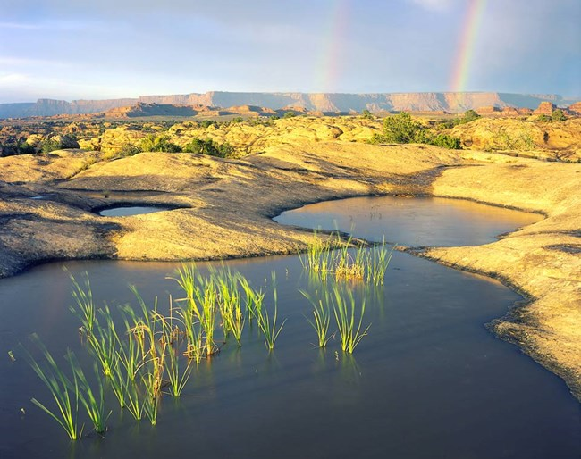 grasses growing in pools full of water with rainbow in background