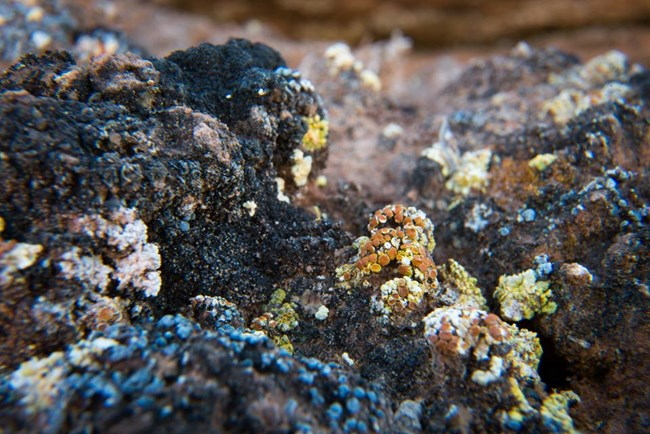 multi-colored lichens growing on black soil crust