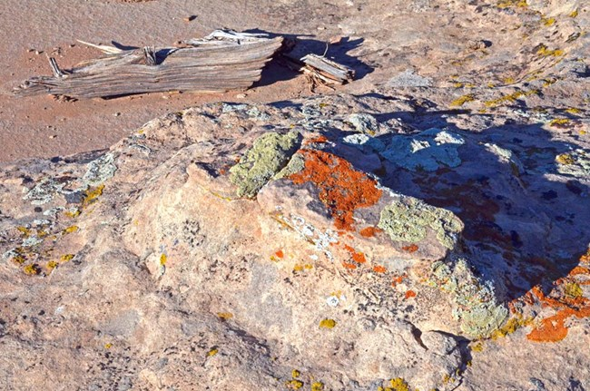 orange and green lichen on pale sandstone