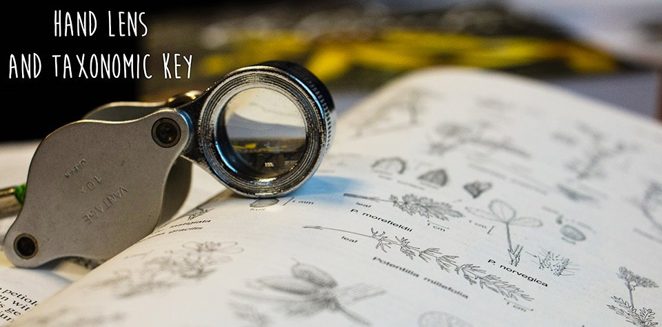 a small magnifying glass sitting on top of an open book with plant illustrations