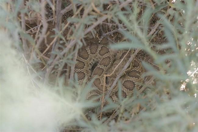 Hibernation Chamber Is Needed for Snake Breeding