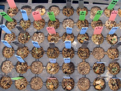 Experimenting with conditions that affect germination and growth.