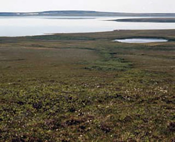 Green, low-growing tundra next to large bodies of grey-blue water.