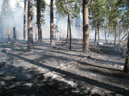 White ash is visible on the ground where dead and down fuels burned, leaving the standing trees healthy.