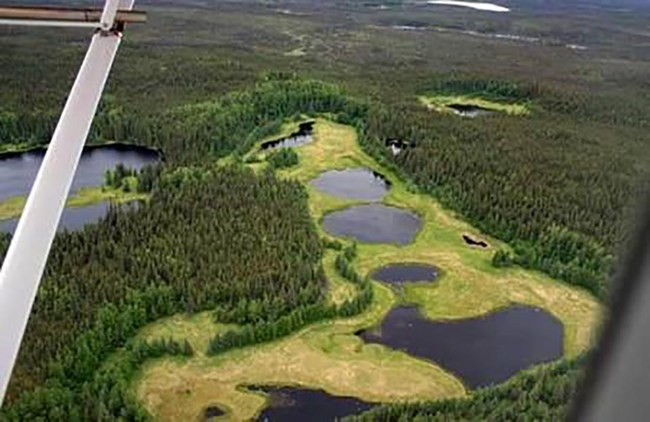 Aerial view of a string of lakes in the boreal forest, showing signs of shrinking.