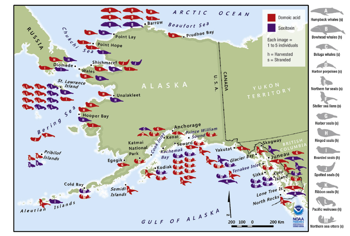 A map of Alaska showing symbols depicting mammal strandings of various species from the Gulf of Alaska to Barrow, AK