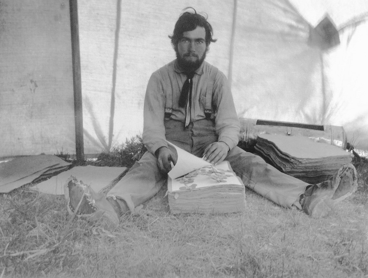 Leslie Goodding sits between stacks of blotters, checking specimens. The photo was taken near the end of the expedition, by which time he had worn the soles off his boots.
