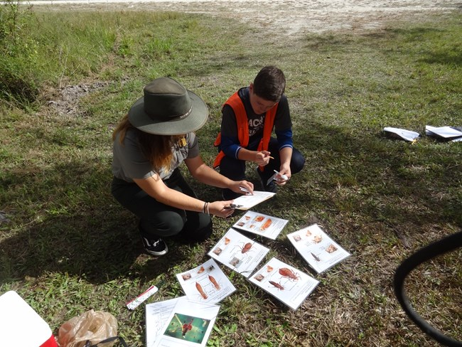 Park ranger and boy looking at dragonfly larvae field cards.