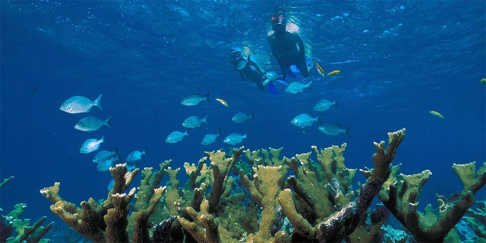 Two people snorkeling above a coral reef