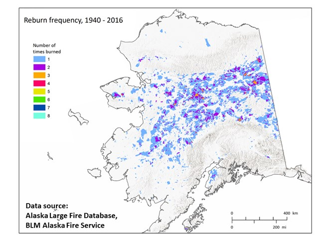 "Alaska reburn frequency map using fire perimeter data from 1940-2016. From J. Barnes 2017 presentation ""What is Fueling Repeat Fires? Shortened Fire Return Intervals in Copper River Basin and Denali""."