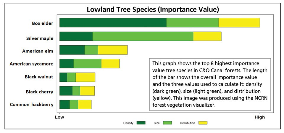 Graph showing dominant trees of lowland forests at C&O Canal NHP.