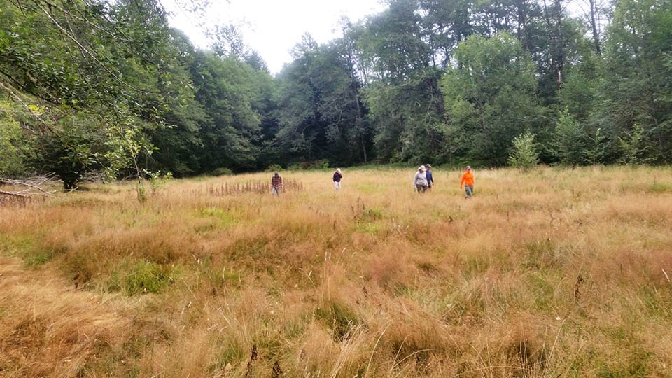 Wide view of a team of people working in a meadow