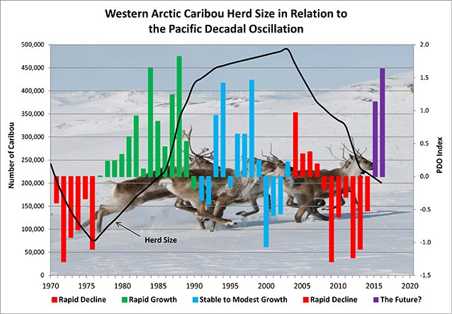 a chart illustrating how caribou herd populations fluctuate in tune with the pacific decadal oscillation