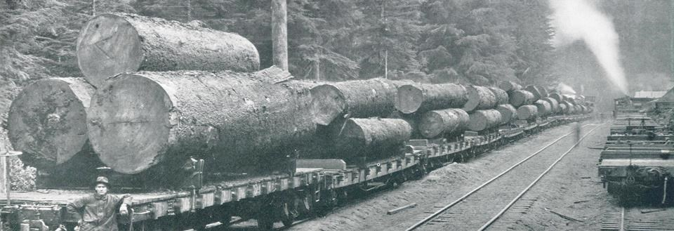 Photo of spruce logs on a railroad car