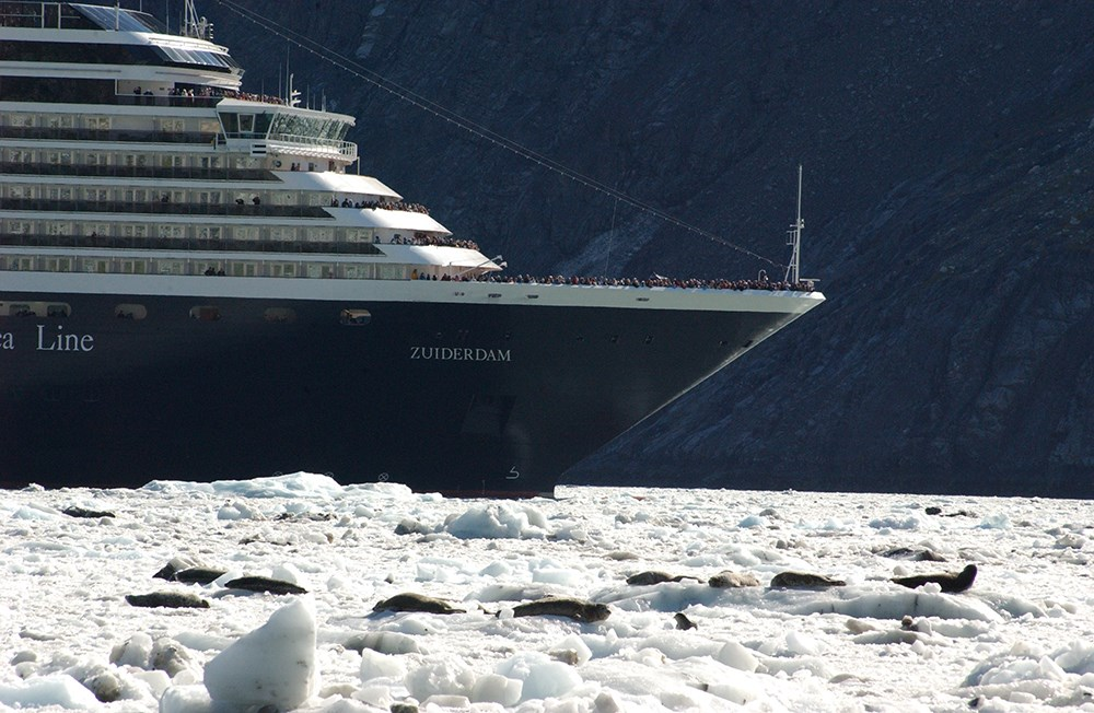 A cruise ship is approaching harbor seals hauled out on ice in Glacier Bay National Park
