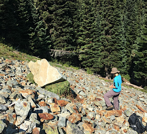 A person stands on a scree slope looking at a large pile of plant material tucked underneath a boulder on the slope.