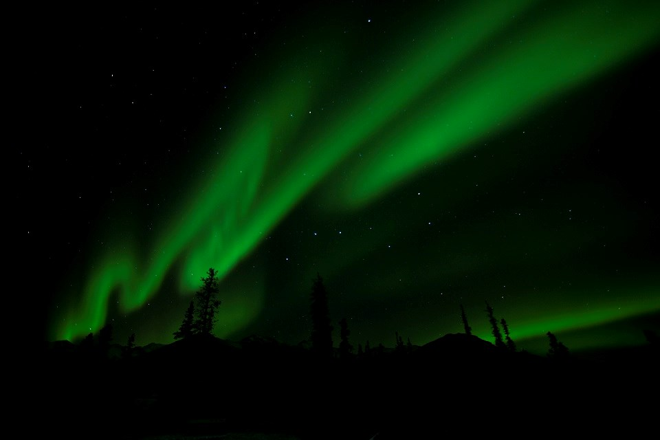 Green-tinted aurora borealis in the night sky over trees