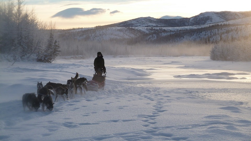 Ranger mushing sled dogs