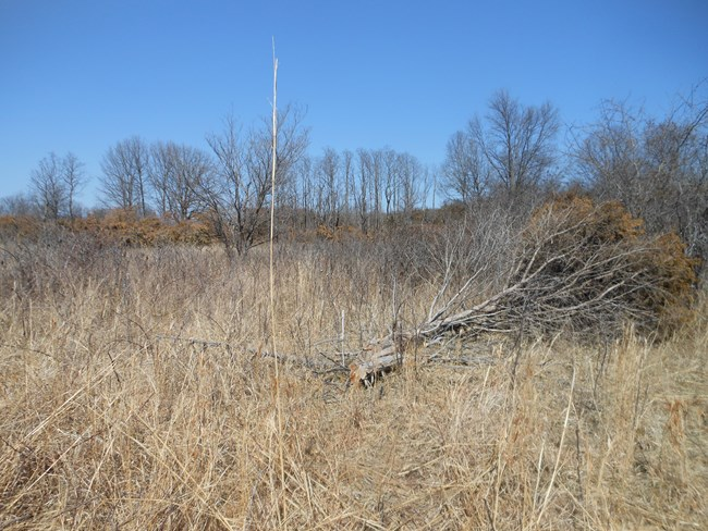 Tall grasses, trees, and shrubs on the prairie at Pea Ridge National Military Park.