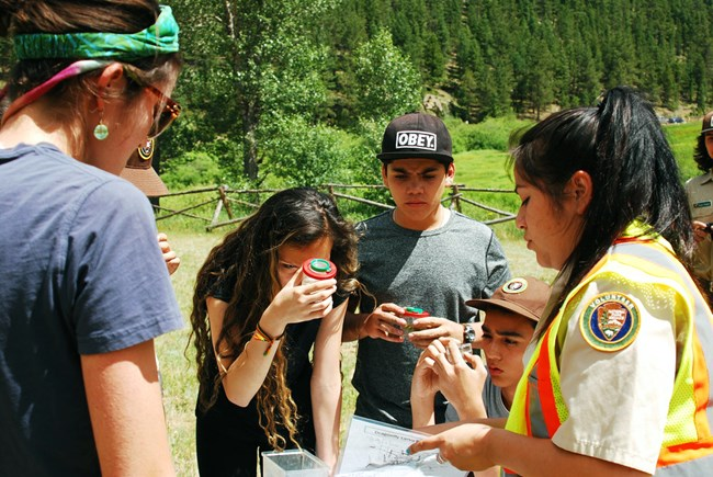 A group of students examine dragonfly larvae samples.