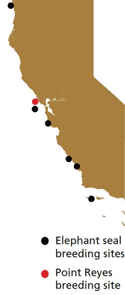 Map of all seven elephant seal breeding sites in California, with Point Reyes highlighted in red