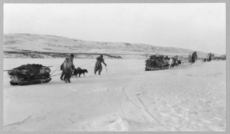 An historic image of a group of northern people travelling across the snow with sleds and animals.