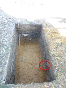Excavation unit with a wagon handle protruding from the profile