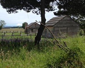 Reconstructed homes of Fort Vancouver's Kanaka Village. The site of William Kaulehelehe's house, foreground, was excavated in the summer of 2012.