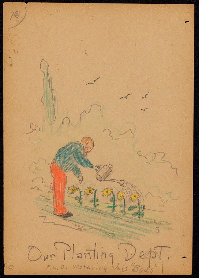 Drawing of Frederick Law Olmsted watering a line of flowers