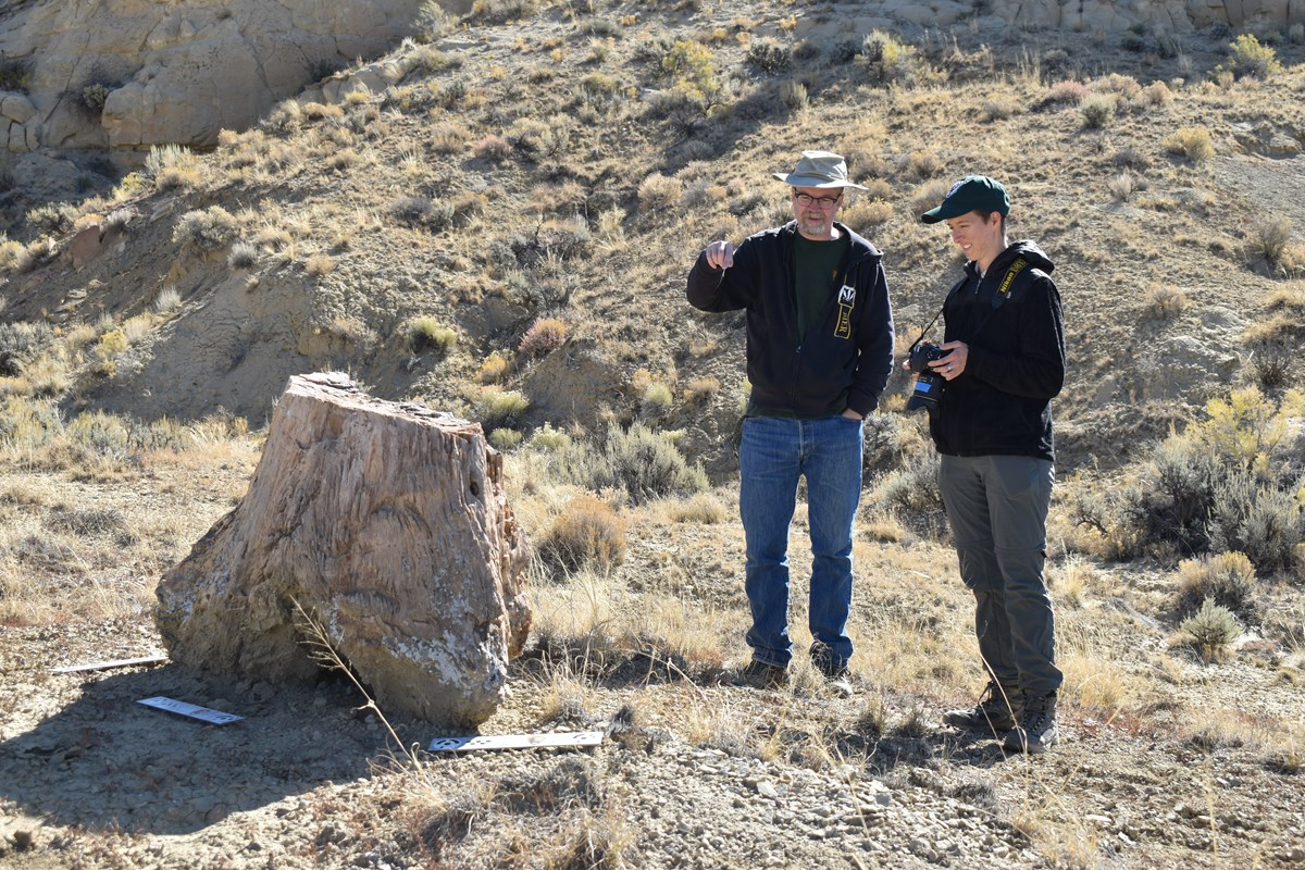 two people examine fossil tree base swell