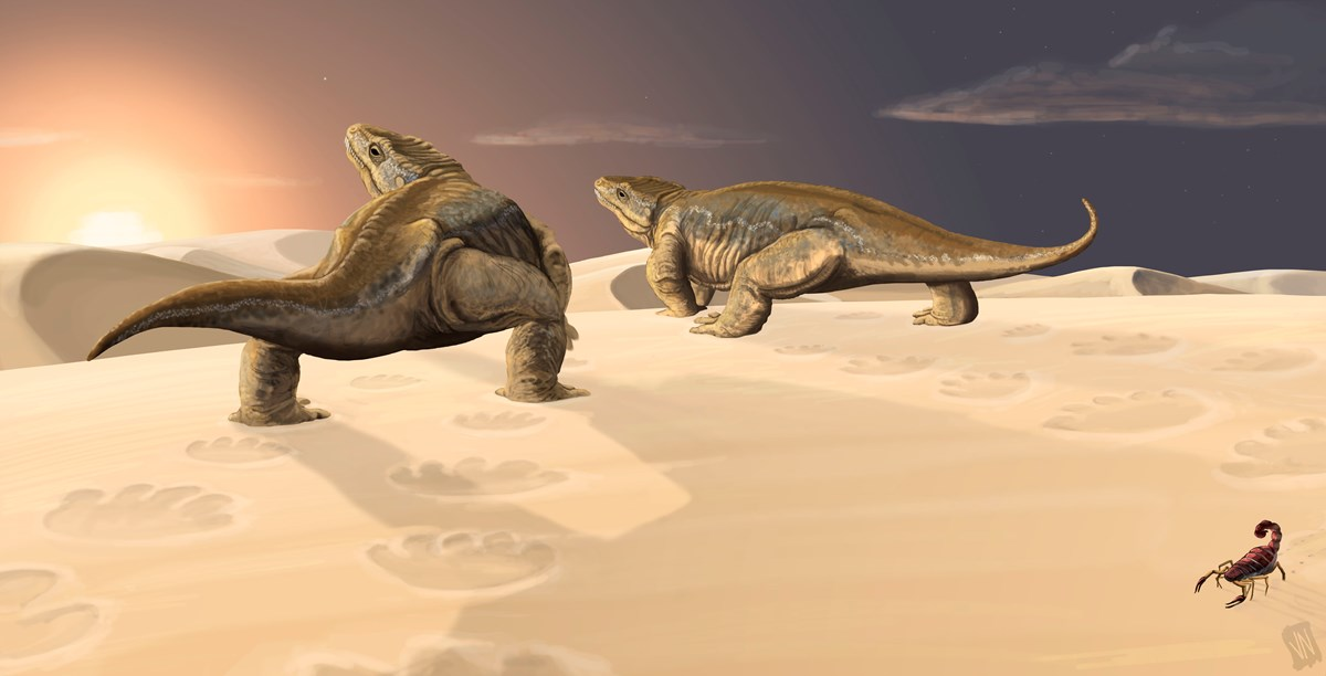 Artwork depicting the Coconino desert environment and two primitive tetrapods